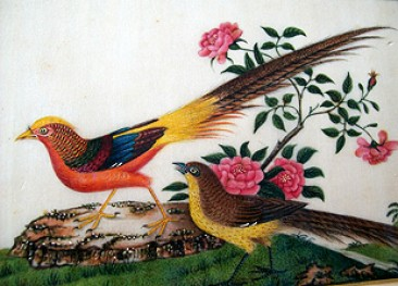 No 156 – Chinese Pit Paper Painting of Gold Pheasant Qing Dynasty